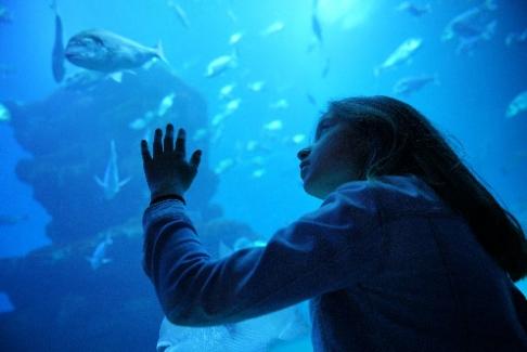 fille regardant les poissons