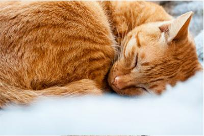 Visuel de chat qui dort