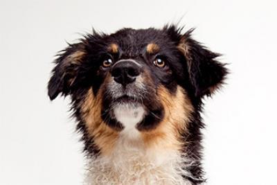 Visuel de chien